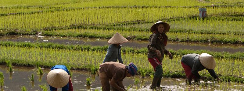 lees het hele Vietnam blog van onze rondreis